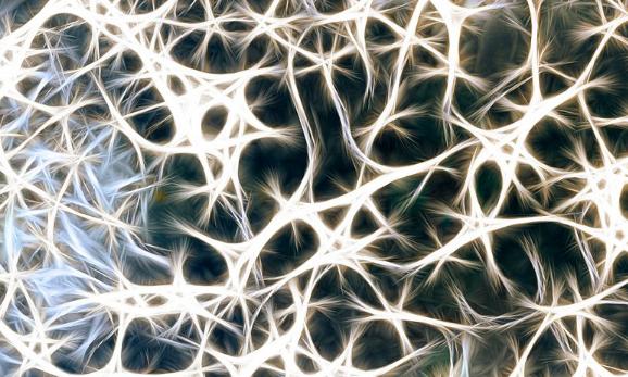 Enlace al blog Neurociencias Parc Taulí